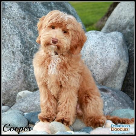 Cooper 4 Months 1