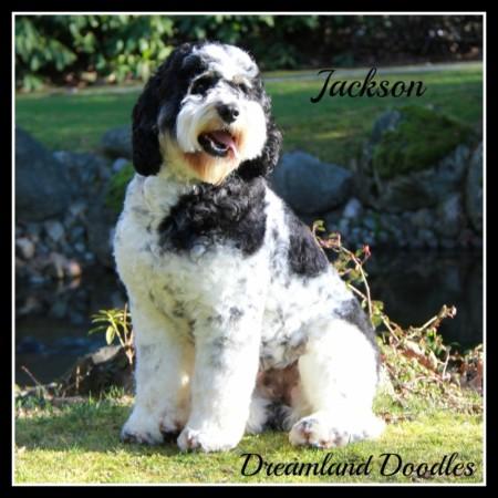 DLD Jackson 1 - Copy