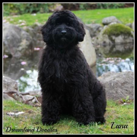 DLD Luna 2