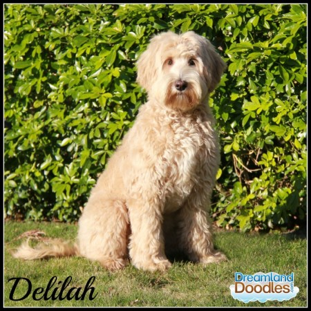 Delilah Sit Up 1b